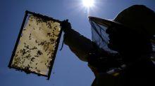 El engaño consentido de la miel: pasaporte europeo, origen chino