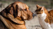 """""""Si yo no como carne, mi mascota tampoco"""": las dietas veganas para perros y gatos ganan adeptos"""