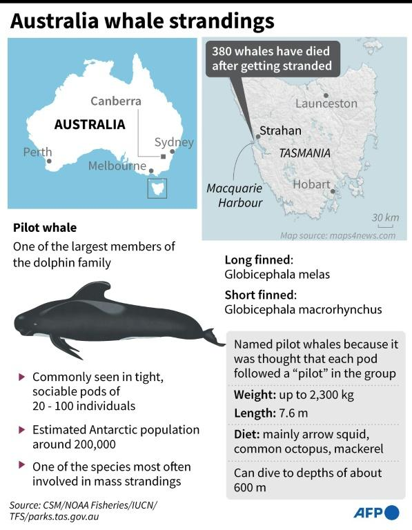 Australia whale strandings
