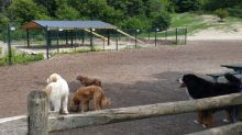 Dog walkers frustrated with $135K dog park shelter 'marred by problems'