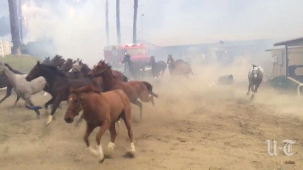 500 Horses Seen Galloping for Their Lives as Training Facility Falls Victim to California Wildfires