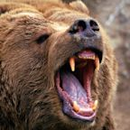 Fund managers haven't been this bearish since the financial crisis thanks to the trade war