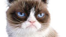 Morre Grumpy Cat, a gatinha que virou meme, e a internet lamenta