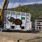 'World's loneliest elephant' Kaavan starts trip to Cambodia