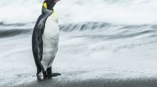 Gigantic penguins waddled the Earth at the same time as the dinosaurs