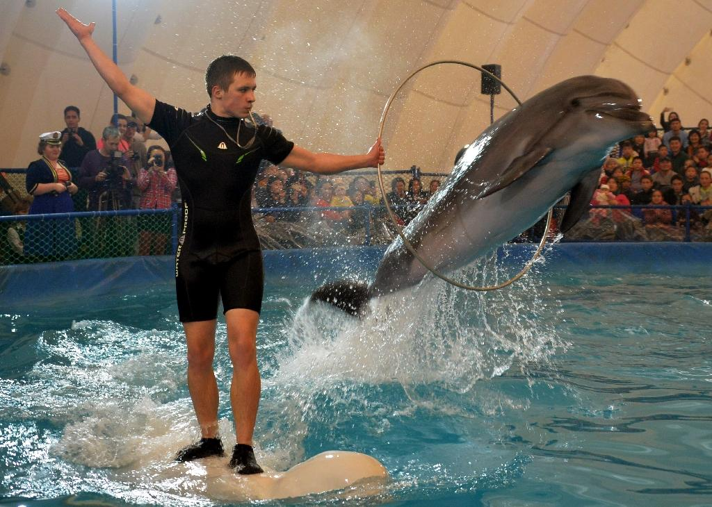 Travelling dolphinariums are banned across much of the world but remain popular in the ex-Soviet bloc (AFP Photo/Vyacheslav Oseledko)