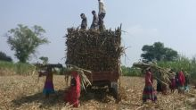 India's October-March sugar output up 19%, exports gain momentum