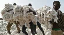 Cotton harvest surges in Ivory Coast