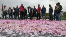Landwirte in Bulgarien fürchten wegen Preisverfall für Rosenblätter um Existenz