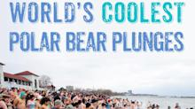 World's Coolest Polar Bear Plunges