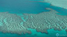 New photos reveal widespread devastation of Great Barrier Reef
