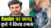 Ranbir Kapoor's dog attacked him, wound on his face