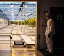 CannTrust makes its case as a major Canadian weed producer, stock explodes higher