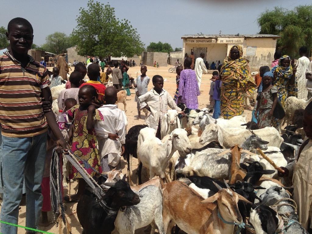 Shadow Of Jihadists Falls On Cameroons Cattle Farmers