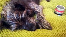 """""""RelaxoDog"""": Das Entspannungssystem für Hunde im Yahoo-Test"""