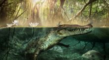 Origin story: America's crocodiles came out of Africa