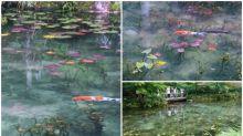 日本網民私密景點 岐阜縣超靚神社「モネの池」