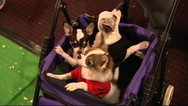 2013 Westminster Dog Show Hits Manhattan