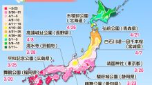 Weathernews最新預測︰櫻花會在3月20日開始開花