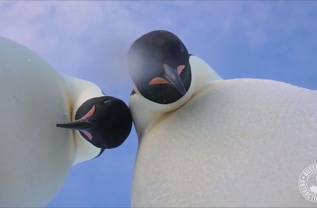 This penguin selfie is the best thing you'll see all day