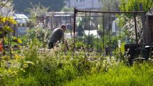 Interest in allotments soars in England during coronavirus pandemic