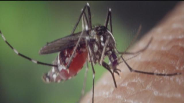 DOH issues warning in Chikungunya virus