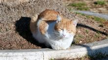 Cats to be sterilised and banned in Australian city under proposed law