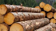 Did You Manage To Avoid Samko Timber's (SGX:E6R) Devastating 83% Share Price Drop?