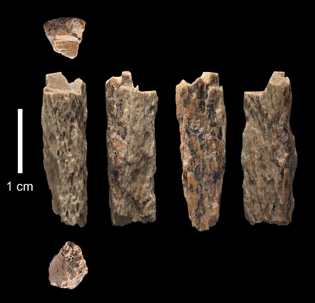 University of Oxford/Max Planck Institute images of a bone fragment of a female -- known as 'Denisova 11' – born of a Neanderthal mother and a Denisovan father. The bone was found in 2012 by Russian archaeologists at Denisova Cave in Siberia