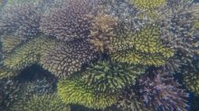 'Super Corals' on Australia's Great Barrier Reef May Save it From Climate Change, Scientists Discover
