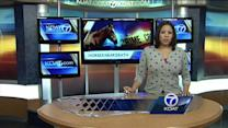 Dennis Chavez takes plea deal in horse mistreatment case