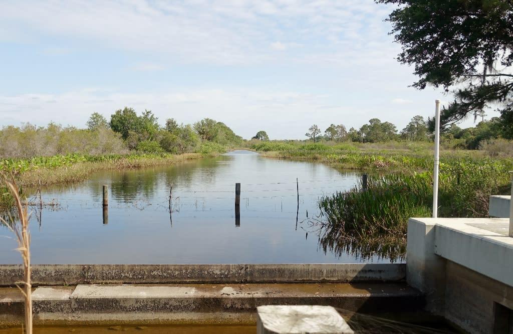 Wetlands restored around Babcock Ranch in Punta Gorda, Florid (AFP Photo/Kerry Sheridan)
