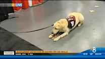Accelerant detection K9 shows off his skills