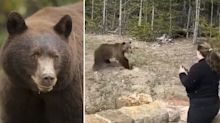 Woman's close call with bear while taking photos at tourist spot