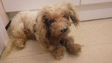 Neglected dog covered in sores and badly matted fur has eye removed