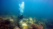 Wreck of Dutch Warship Found Buried Beneath Coral