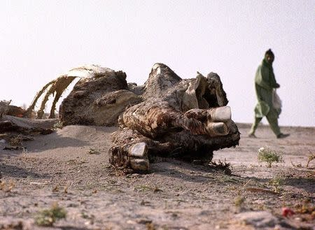 A man walks past the partially sand covered carcass of a cow in the dried up bed of the Hamoun lake outside Zabol in this July 17, 2001 file photo. REUTERS/Carten Firouz/Files