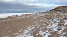 Pets not allowed on P.E.I. National Park beaches beginning Saturday