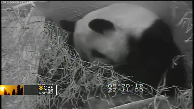 National Zoo's baby panda cub dies
