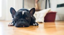 COVID-19 pandemic pushes Pets at Home sales to £302m