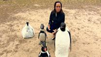 See Through the Eyes of Animatronic Penguins