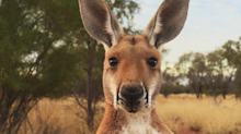 Kangaroo Industry Fact Check