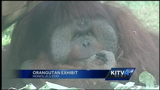 Mother's Day exhibit to help orphaned orangutans