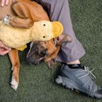Americans adopted fewer pets from shelters in 2020 as the supply of rescue animals fell