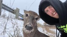 Ontario couple risk lives to rescue deer trapped in ice