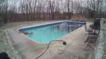 Lexington Police Rescue Deer From Freezing Cold Pool