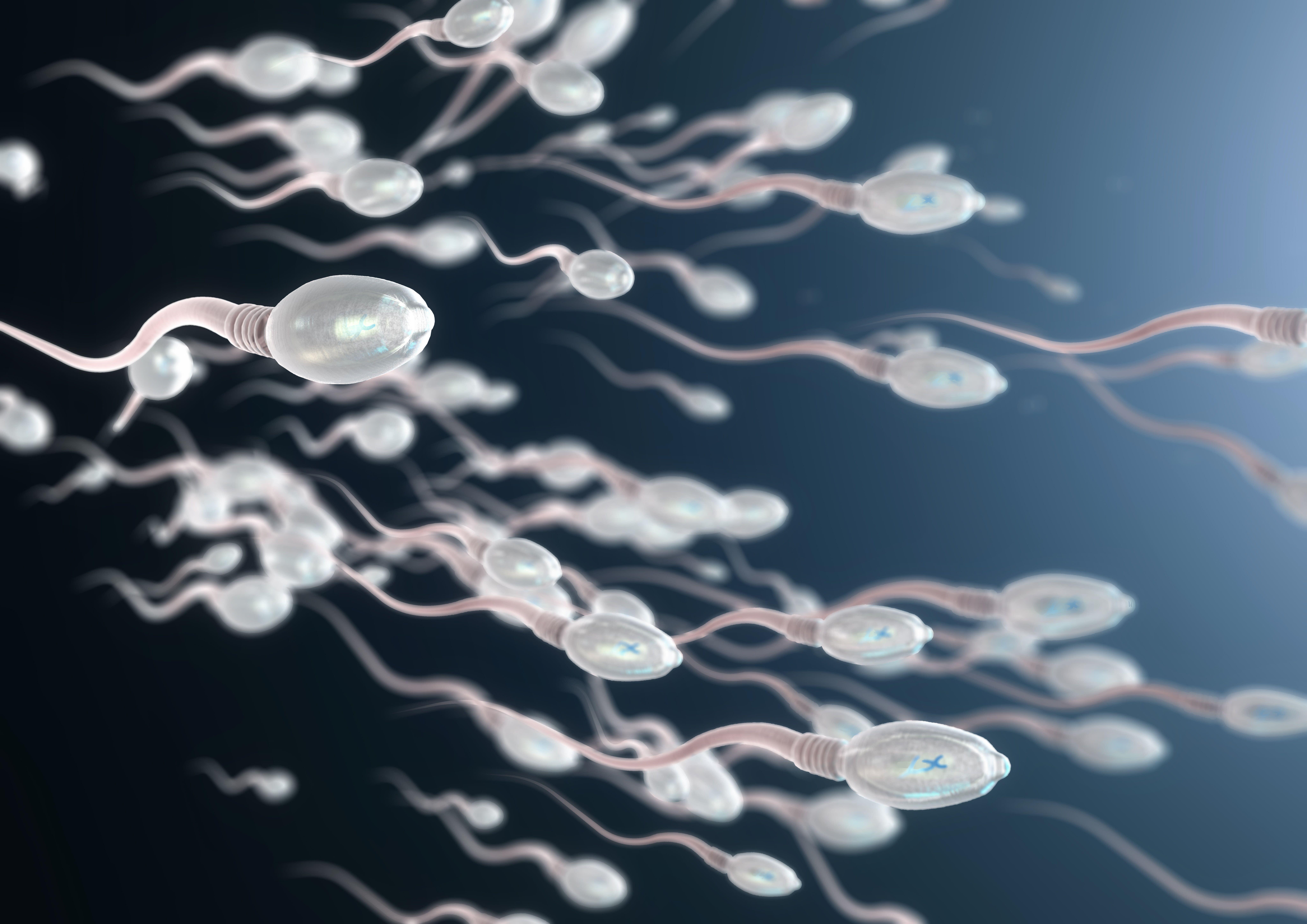 porn-sex-poor-sperm-motility