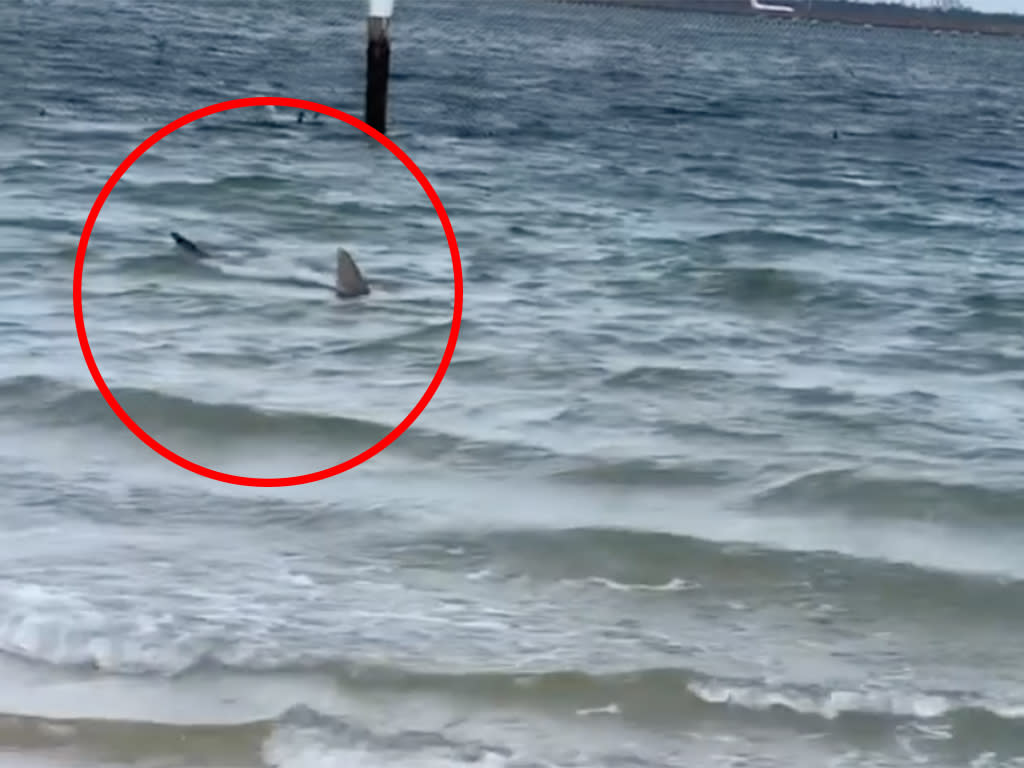 'Get out': Second Sydney beach shut down after shark spotted metres from shore