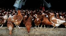 Don't be fooled by the pretty box: find out the horror behind your egg | Chas Newkey Burden