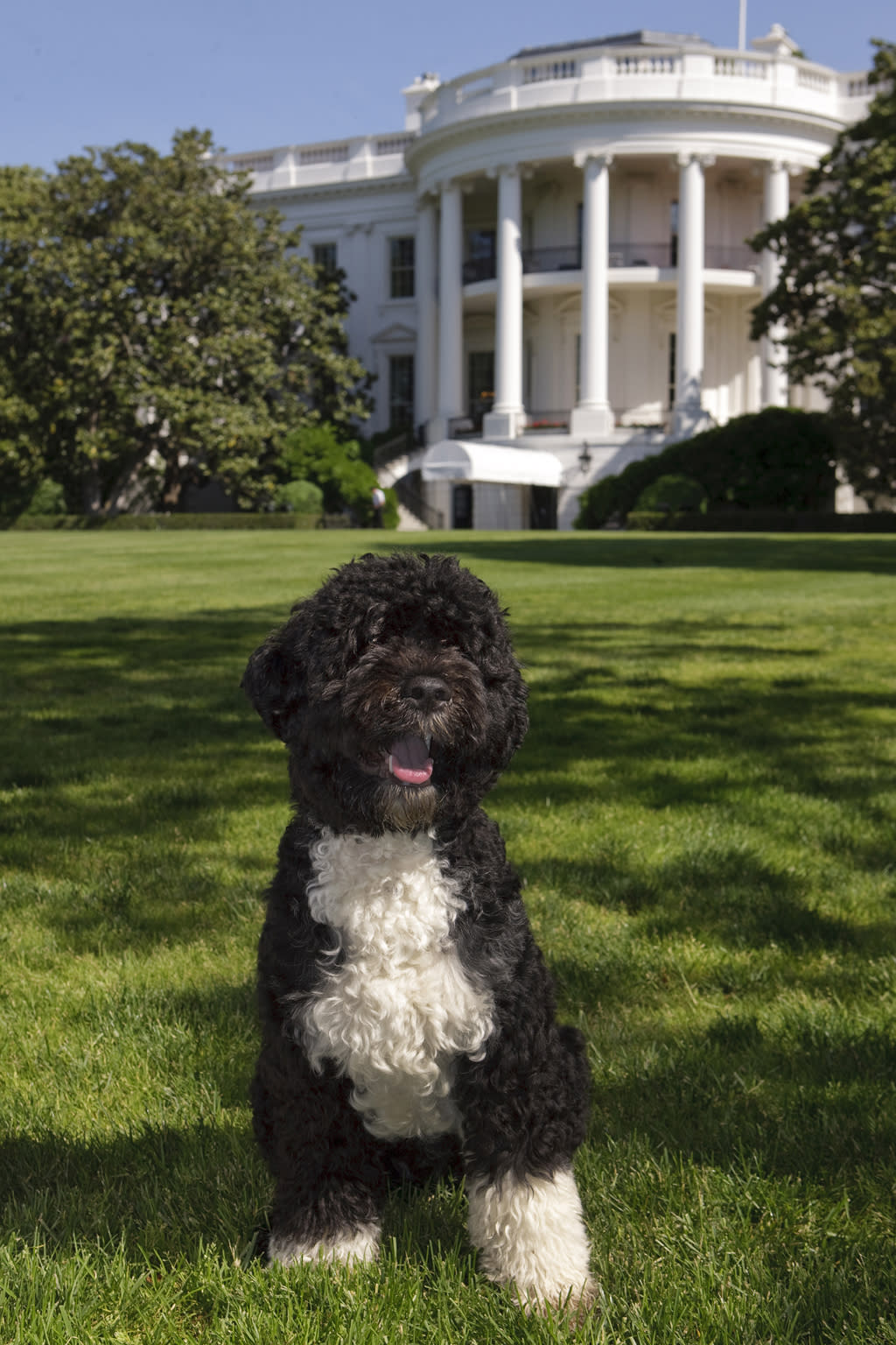 """In this handout image provided by The White House, the official portrait of the Obama family dog """"Bo"""", a Portuguese water dog, on the South Lawn of the White House on May 20, 2009 in Washington, DC. (Photo by Chuck Kennedy/The White House via Getty Images)"""